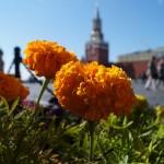 Москва. ГУМ. Цветы и площадь.