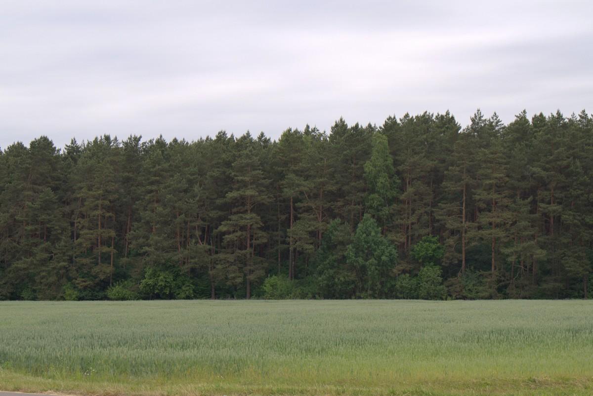 Белоруссия. Леса и поля.