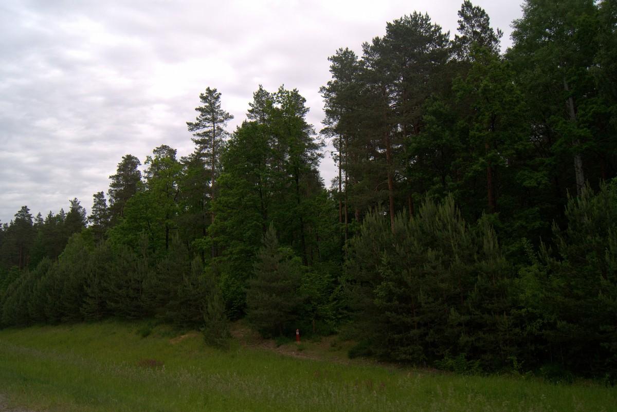 Белоруссия.  У леса.