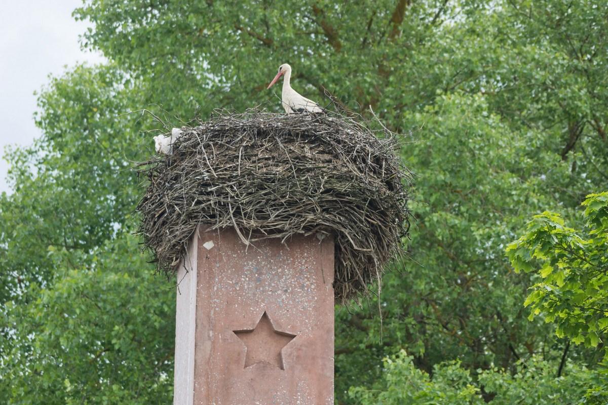 Белоруссия. Гнездо аиста в Клястицах.