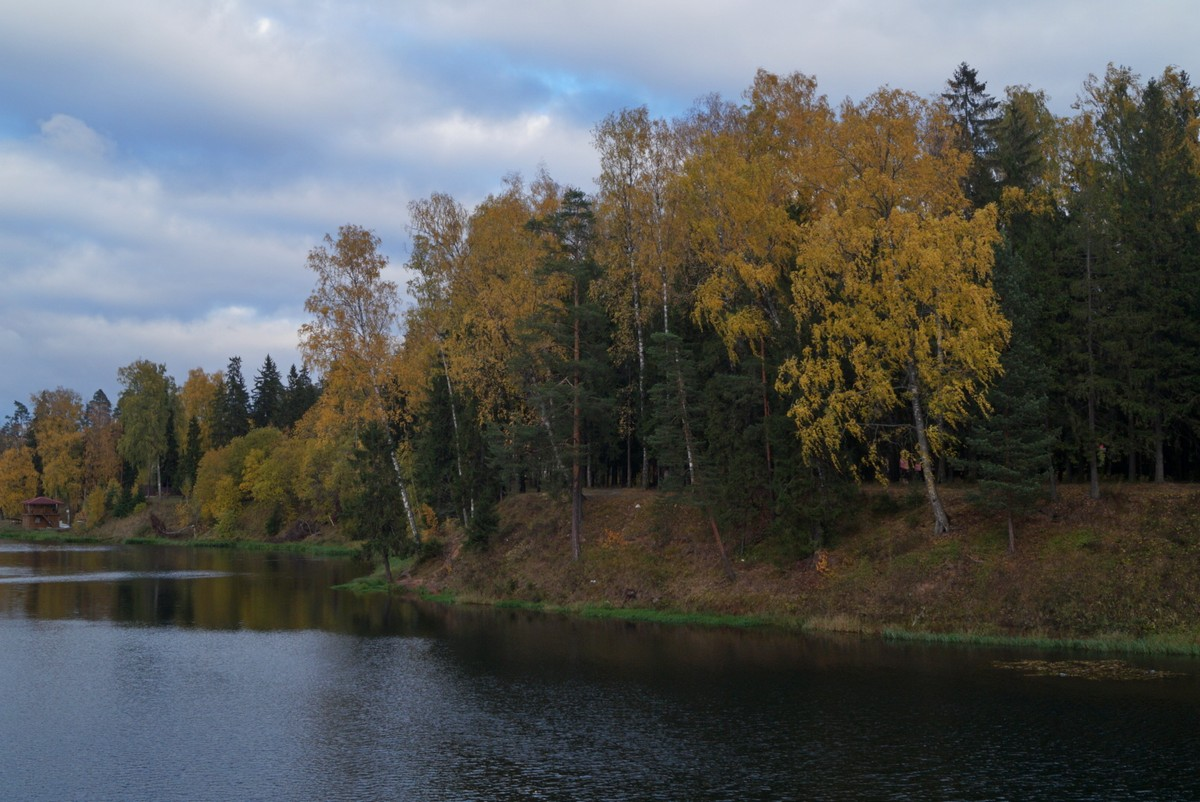 В Сиверском. Река Оредеж. Осенний берег.
