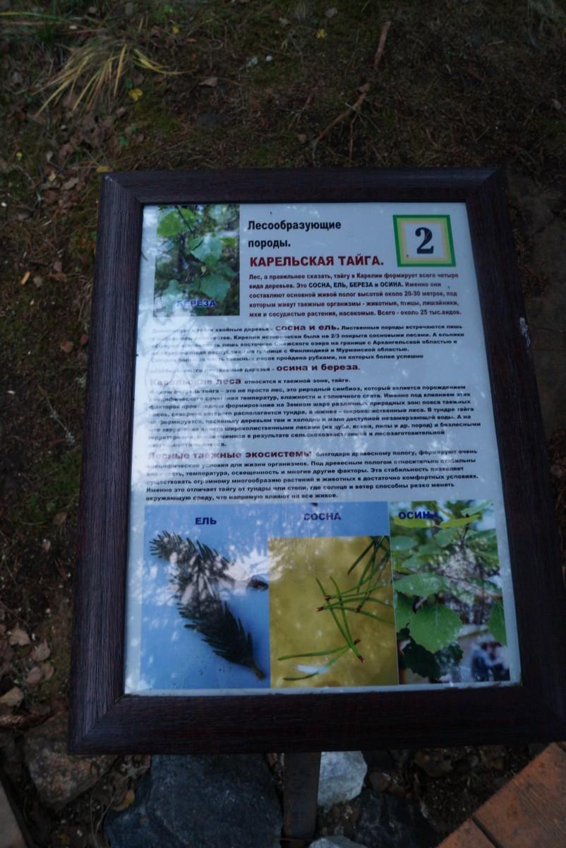 """Лесной парк """"Водопады Ахинкоски"""". О карельской тайге."""