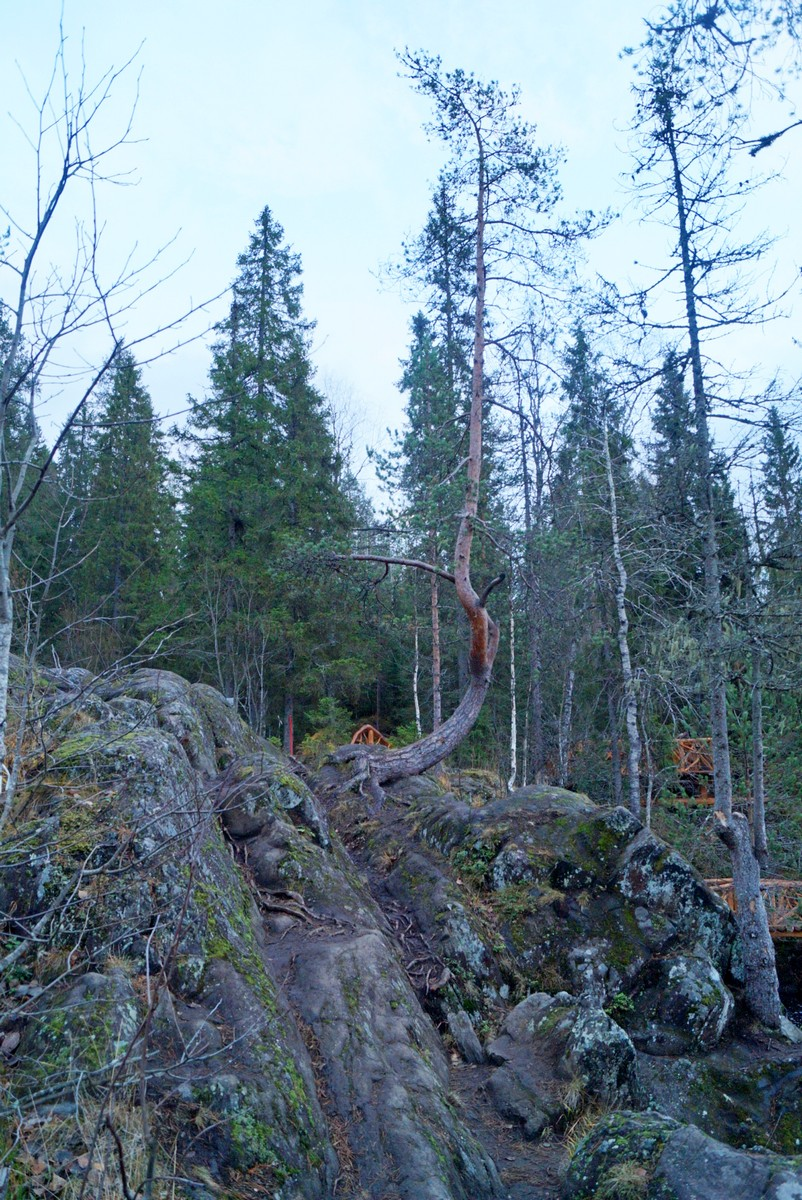"""Лесной парк """"Водопады Ахинкоски"""". Лес и скалы."""