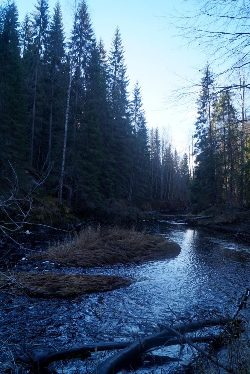 Течение реки Кулисмайоки после водопада.