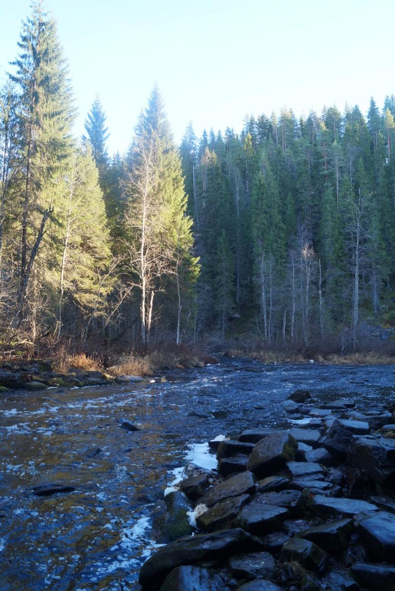 Карелия. Кулисмайоки - мирная горная речка.