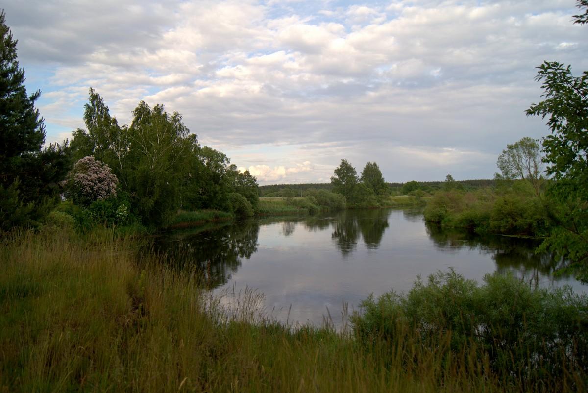 На реке Великой в Псковской области. Начало июня.