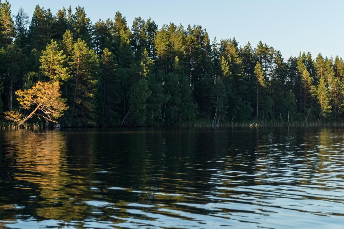 Карелия. Шуезеро. Наше самое удачное рыболовное место.