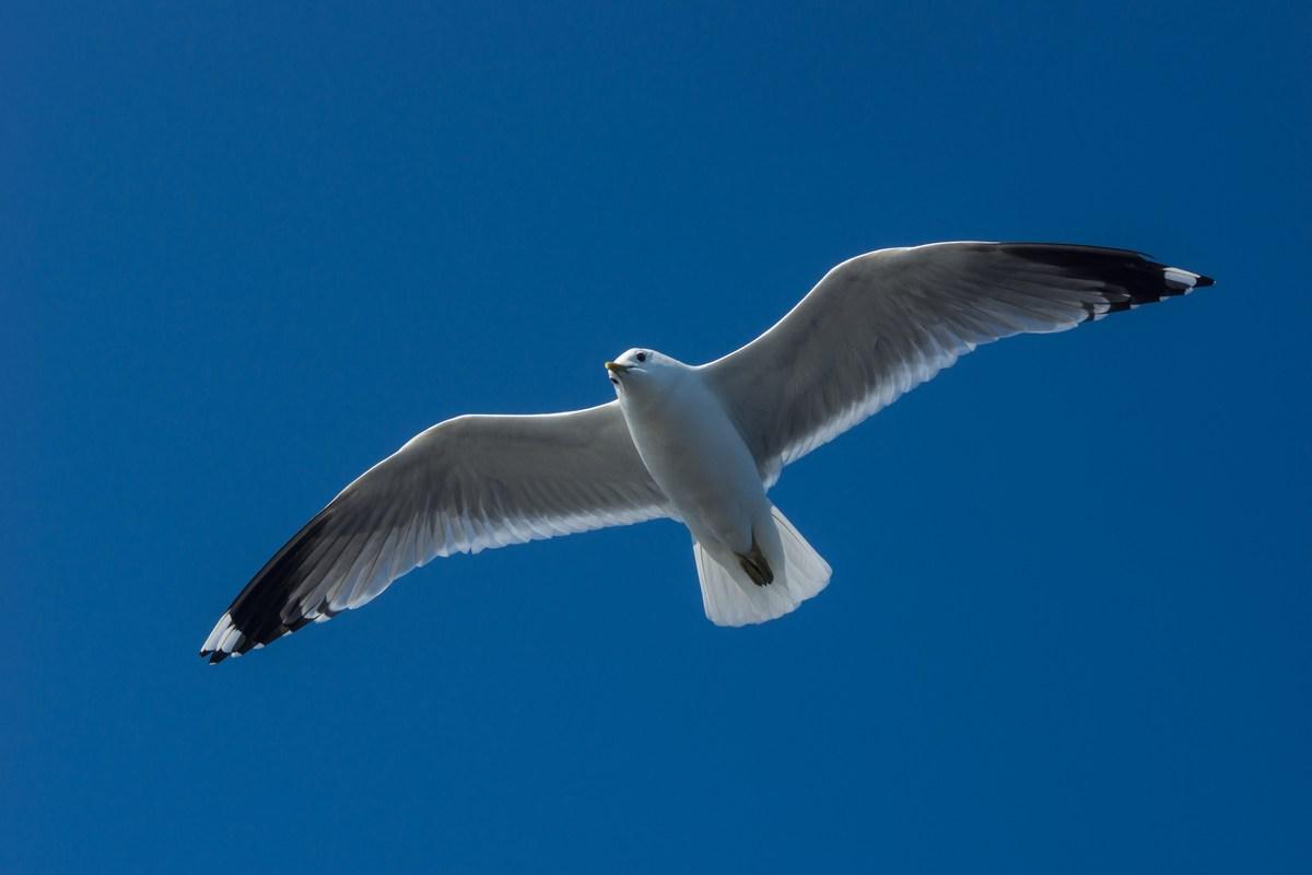 """На теплоходе """"Василий Косяков"""". Чайка над Белым морем. Парим."""