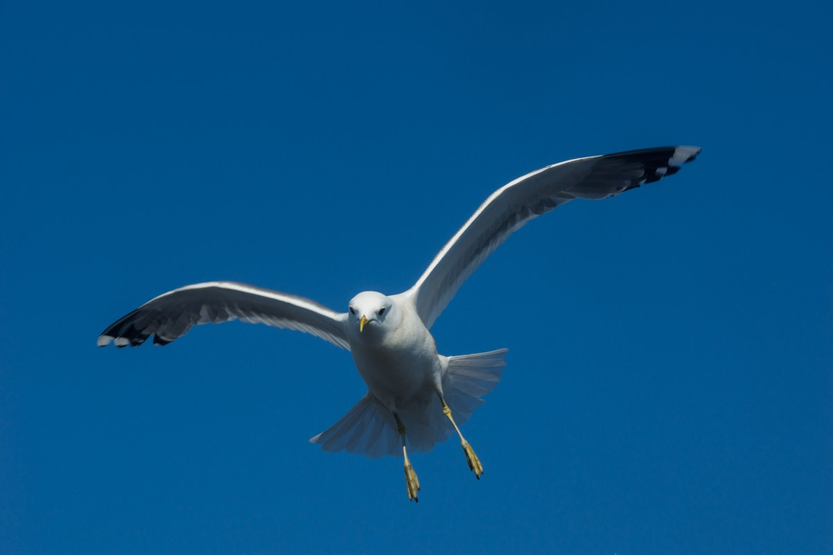 "На теплоходе ""Василий Косяков"". Чайка над Белым морем."