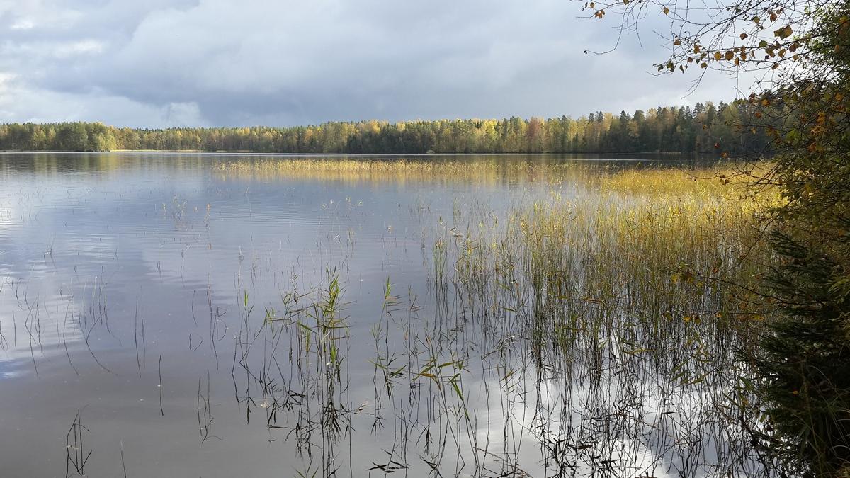 В Кирилловском. Красноперское озеро. Золотые берега.