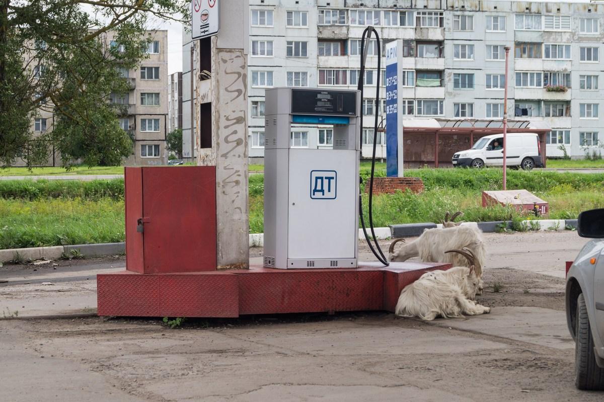 Ленинградская область. Гостилицы. На заправке.
