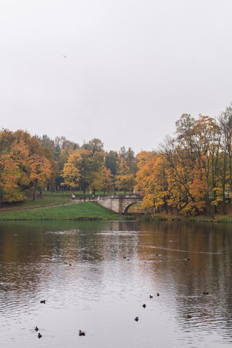 Гатчинский парк. Золотая осень на Белом озере.