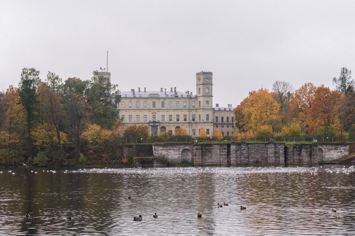 Гатчинский парк. Золотая осень на Белом озере. Большой Гатчинский дворец, пристань чайки на озере.