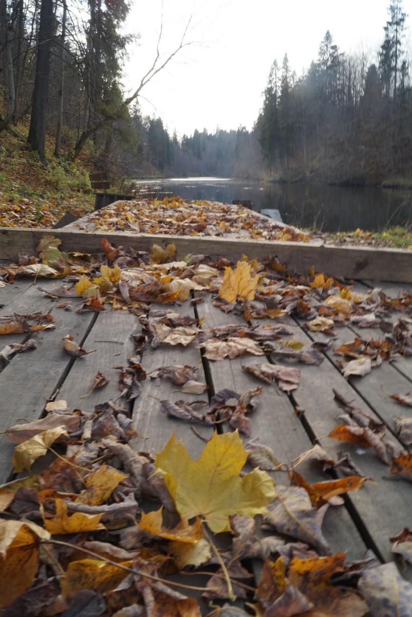 Ленинградская область. Село Лопухинка. Нижнее озеро в октябре.