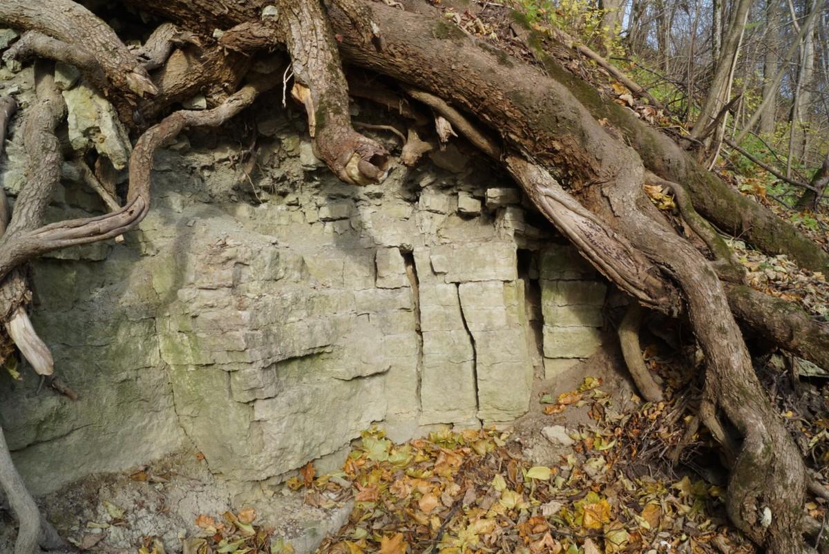 Известняки под корнями в каньоне Лопухинки.