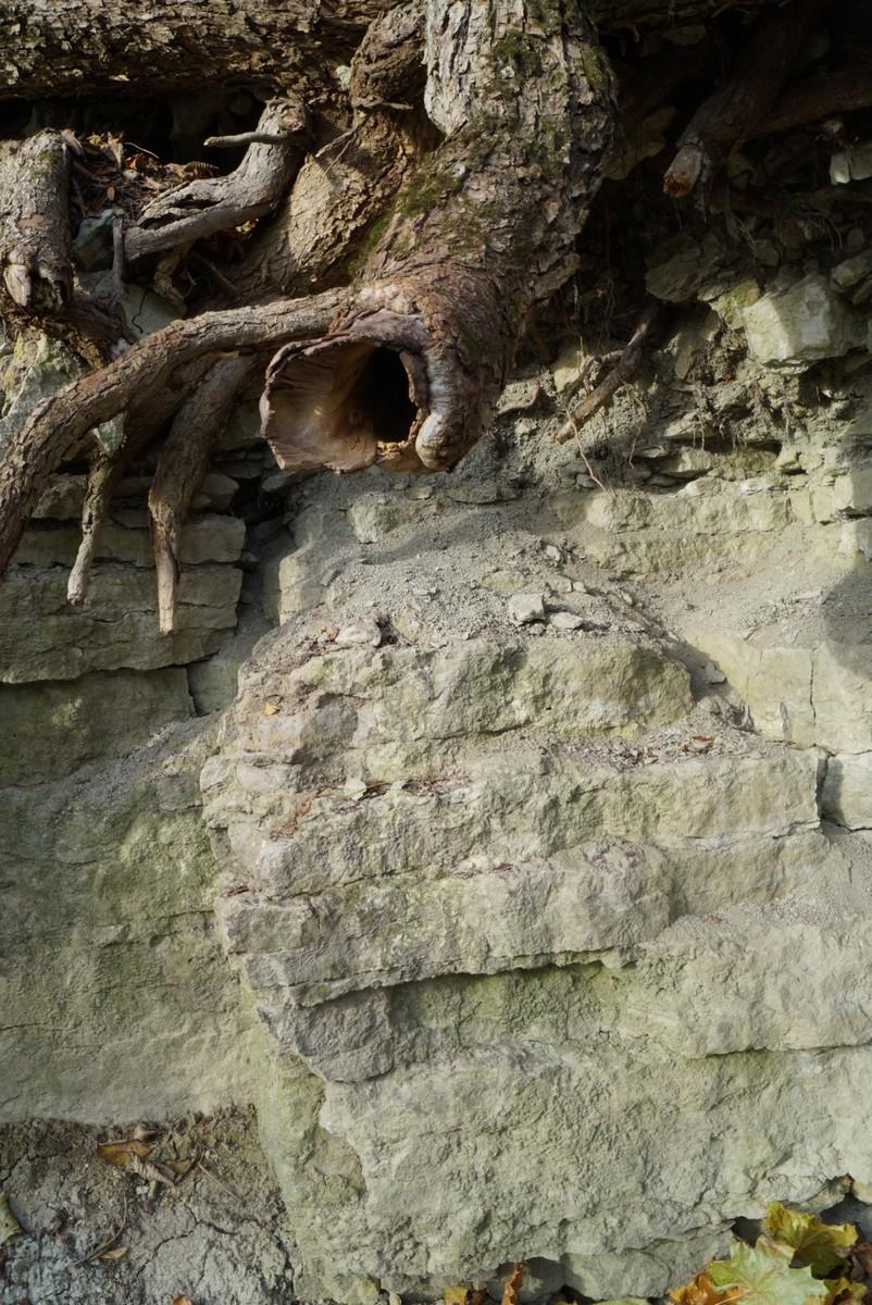 Лопухинка. Чудо-корень и древние известняки.