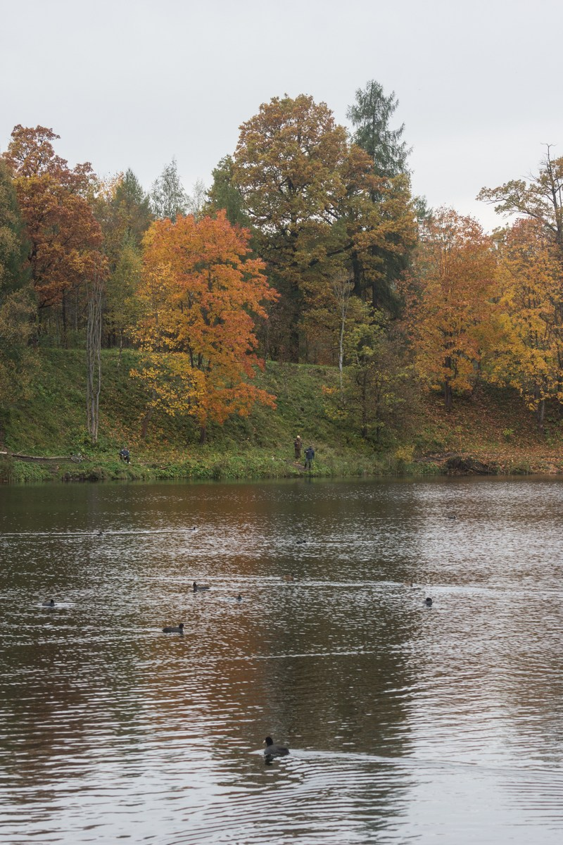 Гатчина. В Приоратском парке. На Черном озере.