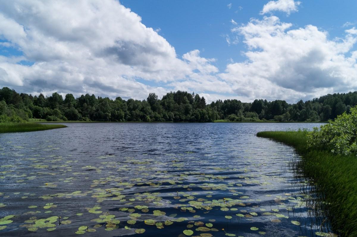 Ферапонтово.  Ильинское озеро в июне.