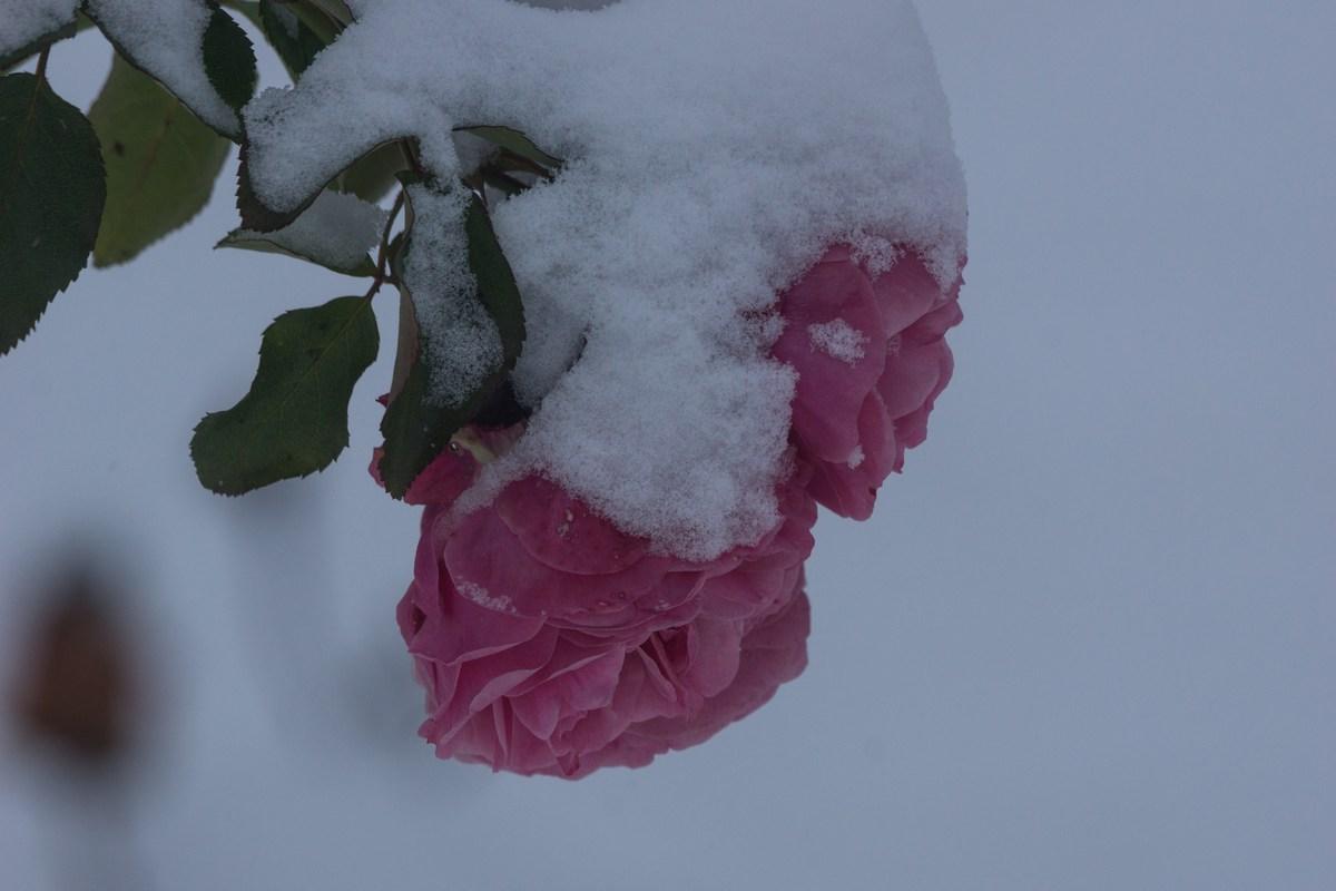Варлаамо-Хутынский монастырь. Первый снег в ноябре.