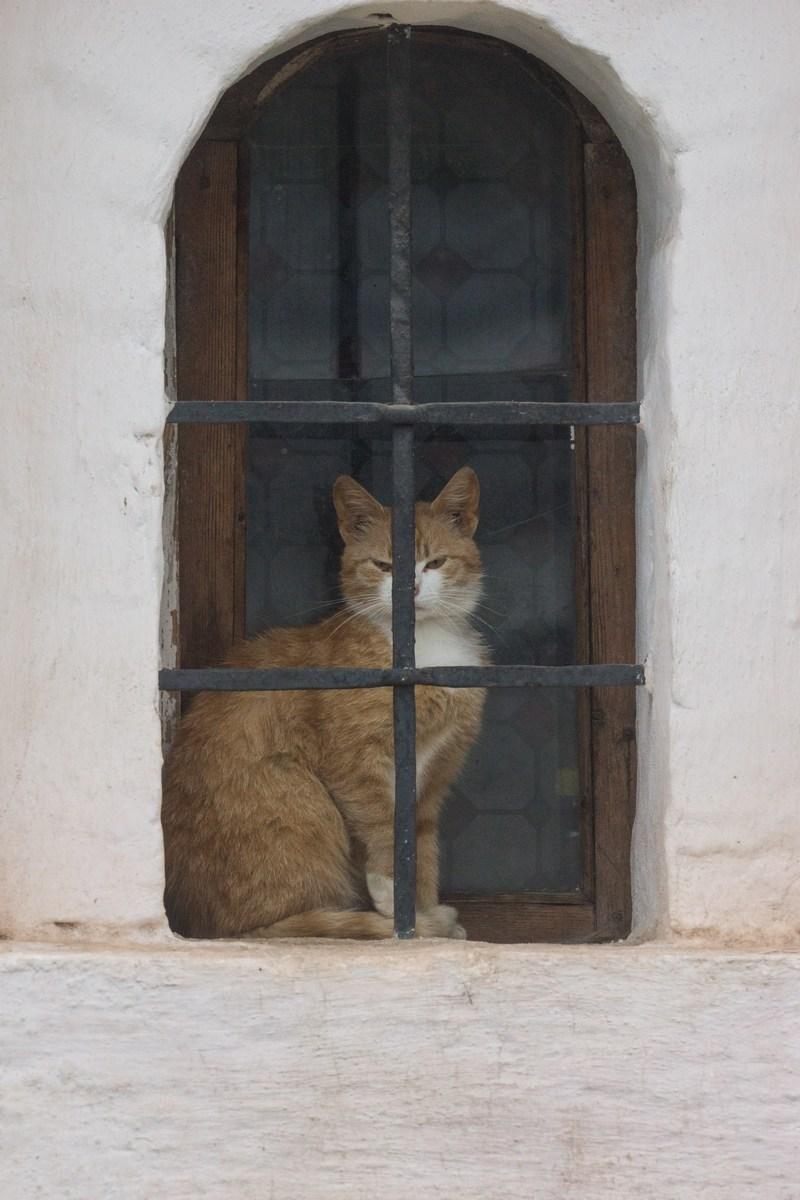 Тихвинский кот в монастыре. Или кошколовка с котом.