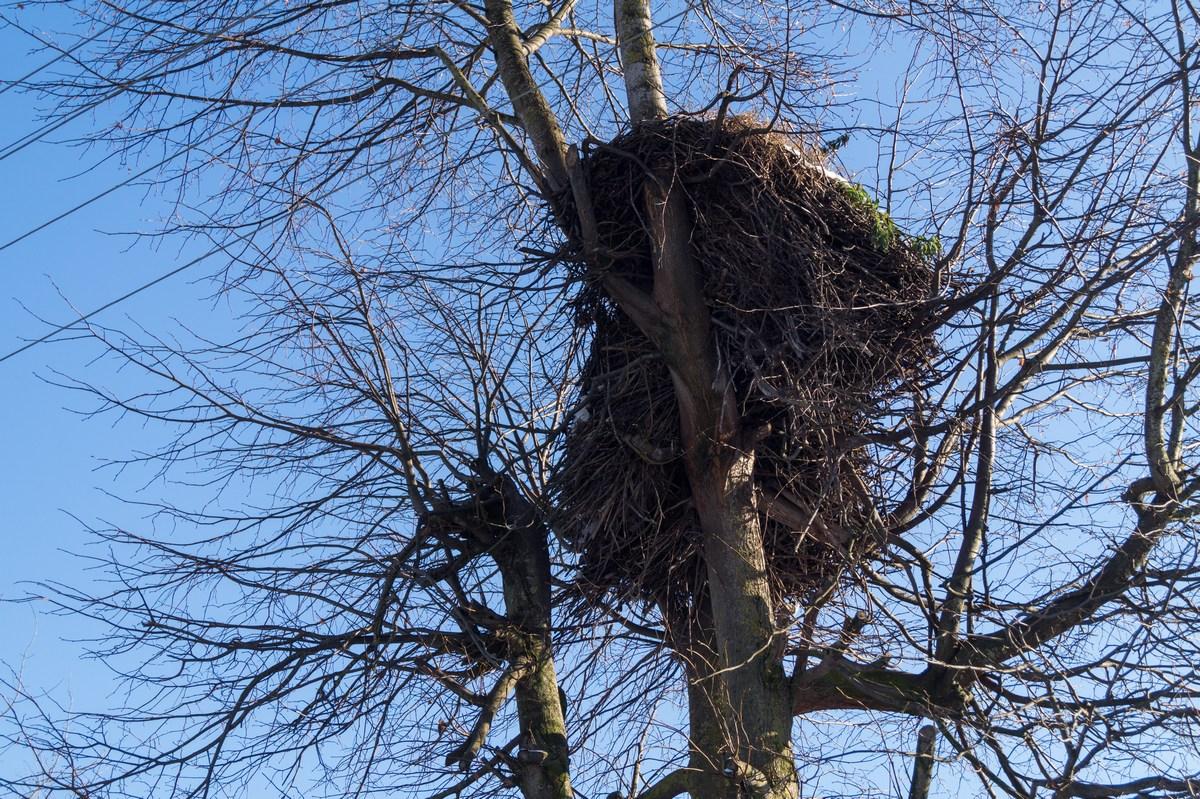 Псковская область. Аистиные гнезда.