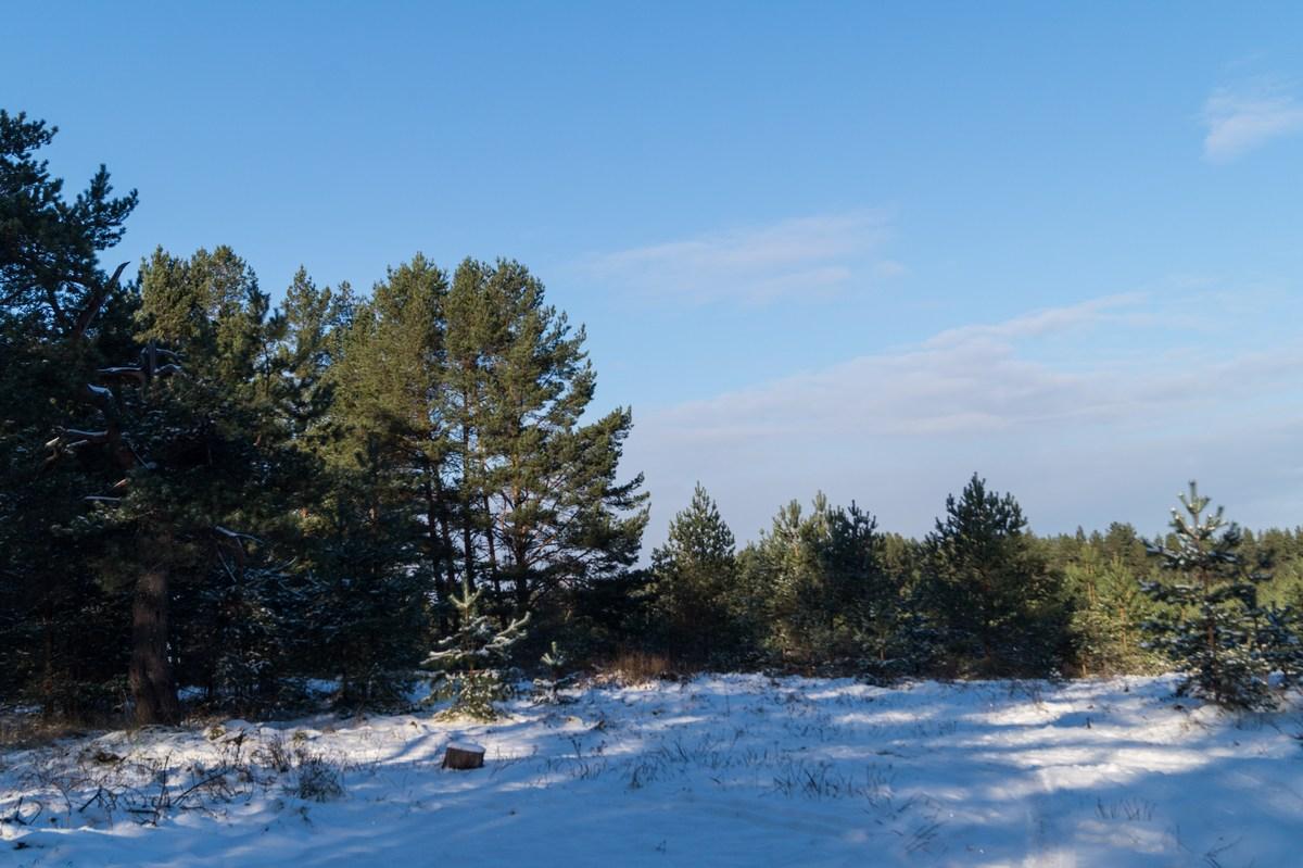 Псковская область. Начало зимы. Ноябрь.