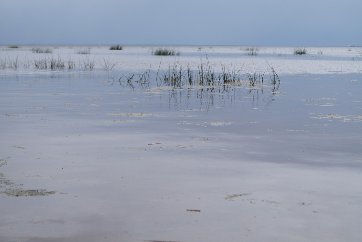 "Июнь. На Финском заливе у поселка Лебяжье. Июньский ""лед""."