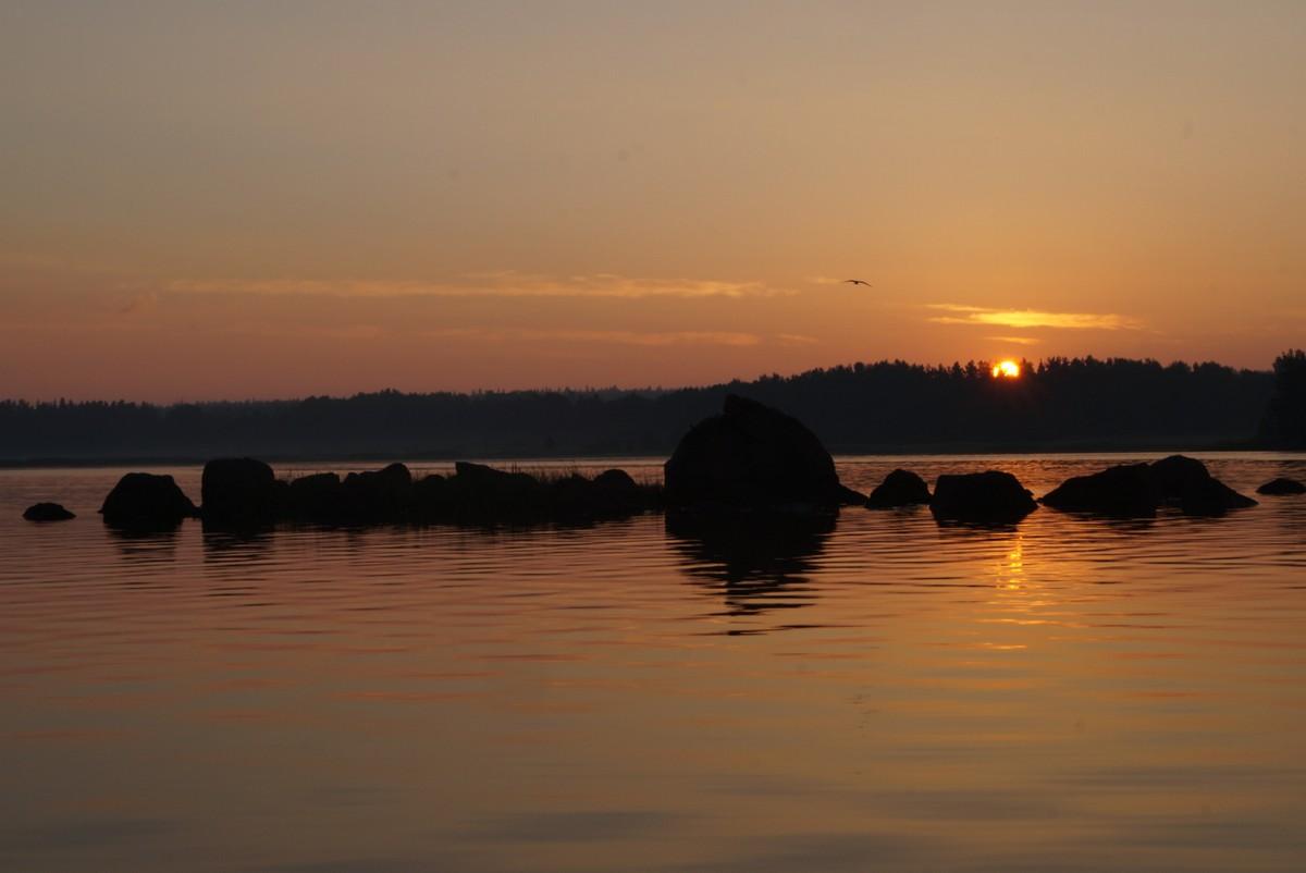 Июнь. На Финском заливе в Глебычево. Восход.
