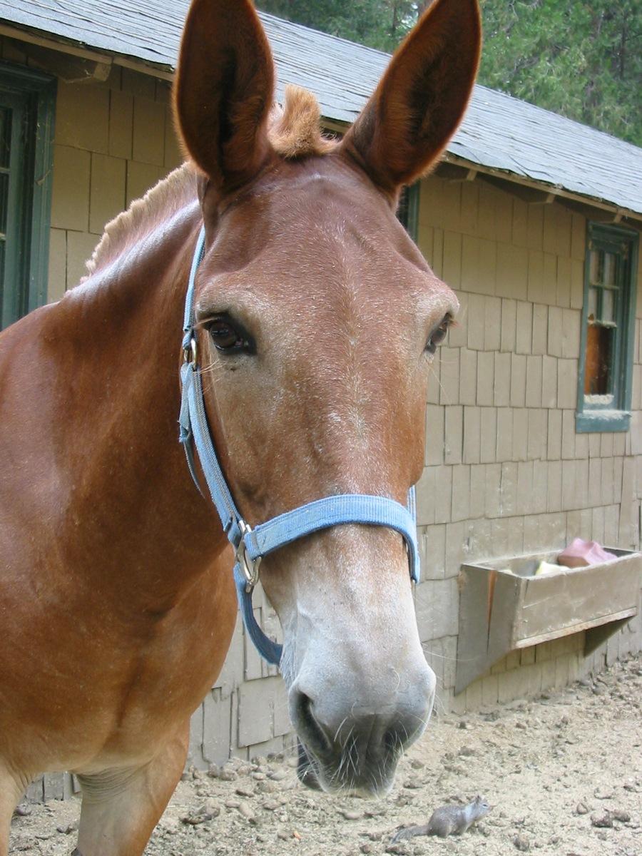 В парке Йосемити. На конюшне. Лошадь и белка.