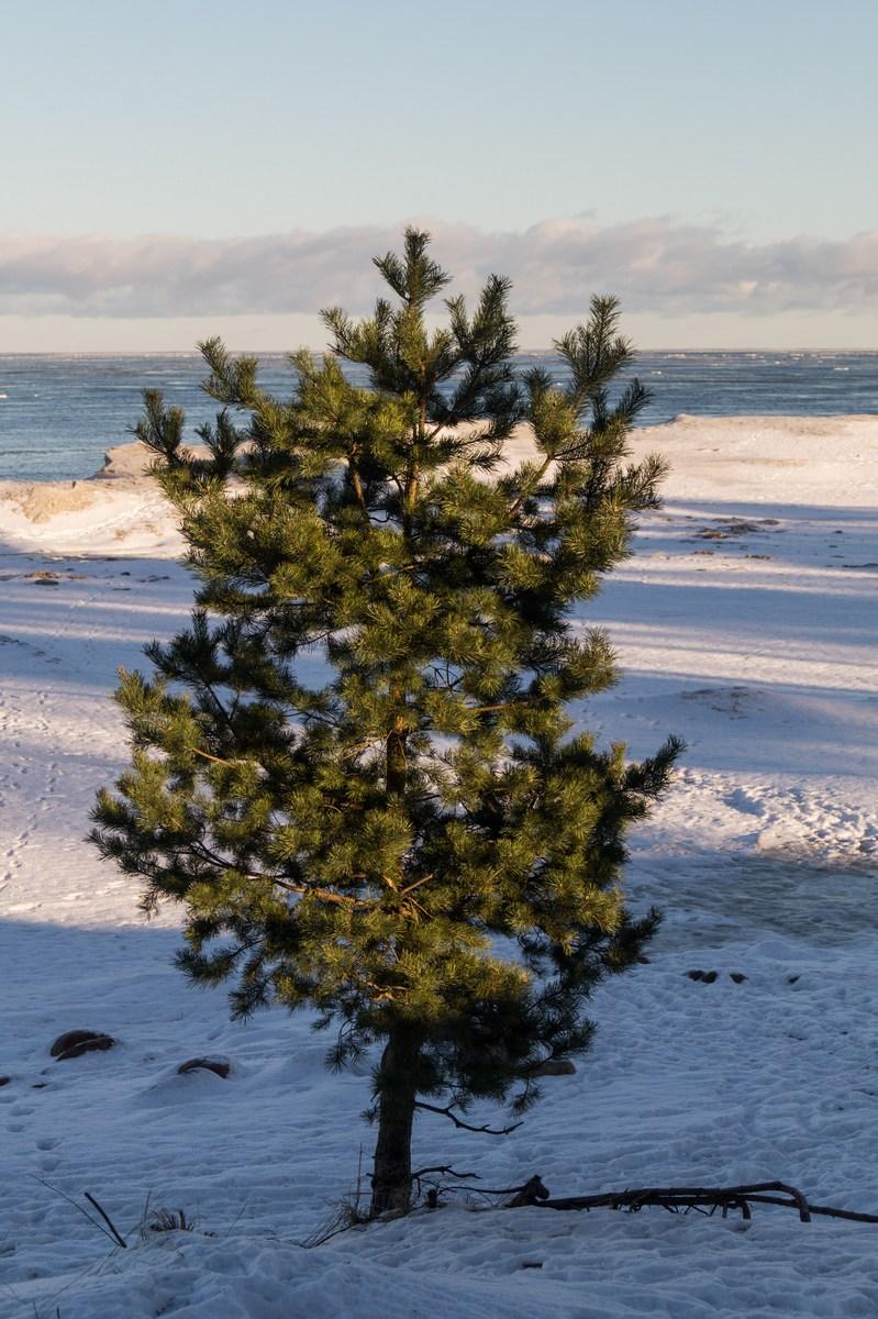 На берегу Ладожского озера. Январь.