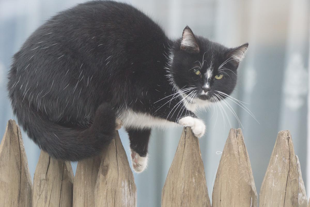 Мозырь. Кот на заборе.