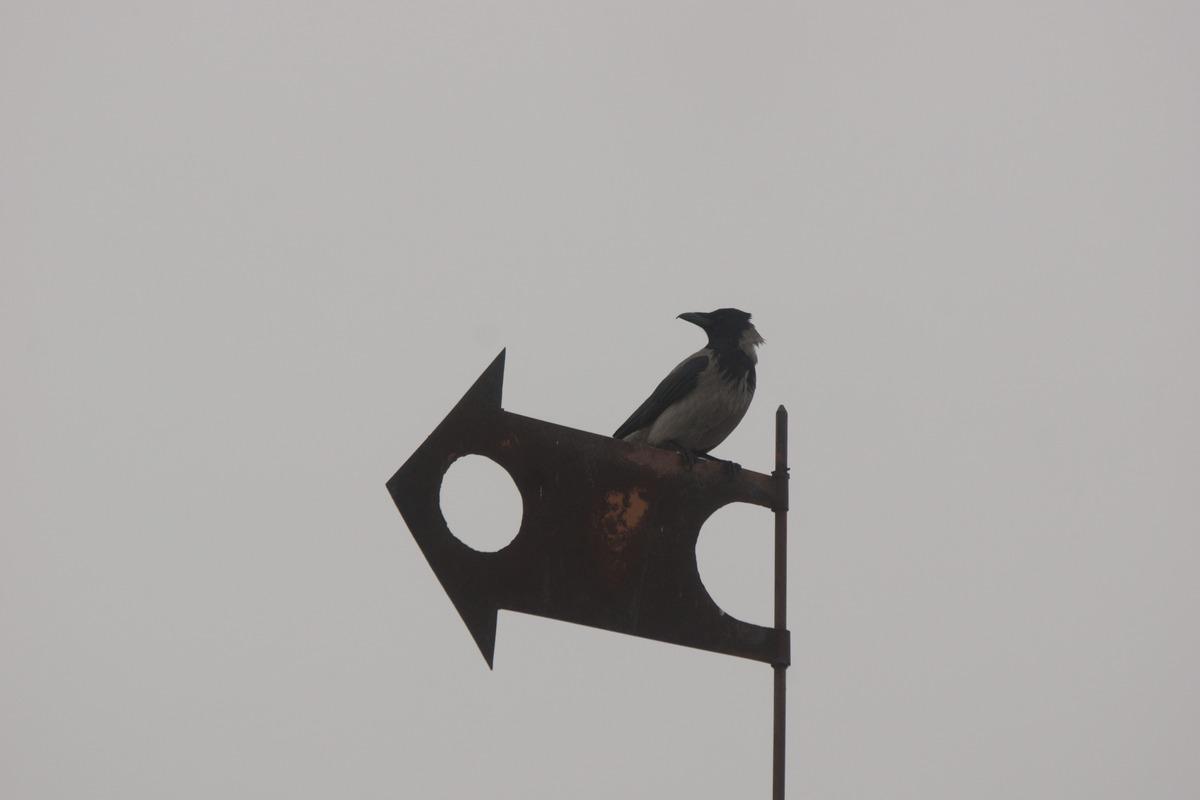 Мозырский замок. Охотничья башня. Ворона обозревает окрестности.
