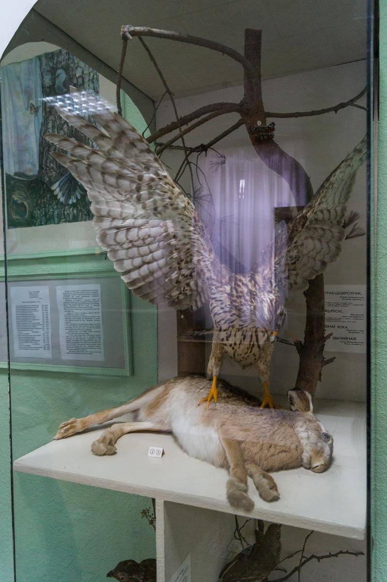 Мозырский замок. В краеведческом музее. Хищная птица и заяц-жертва.
