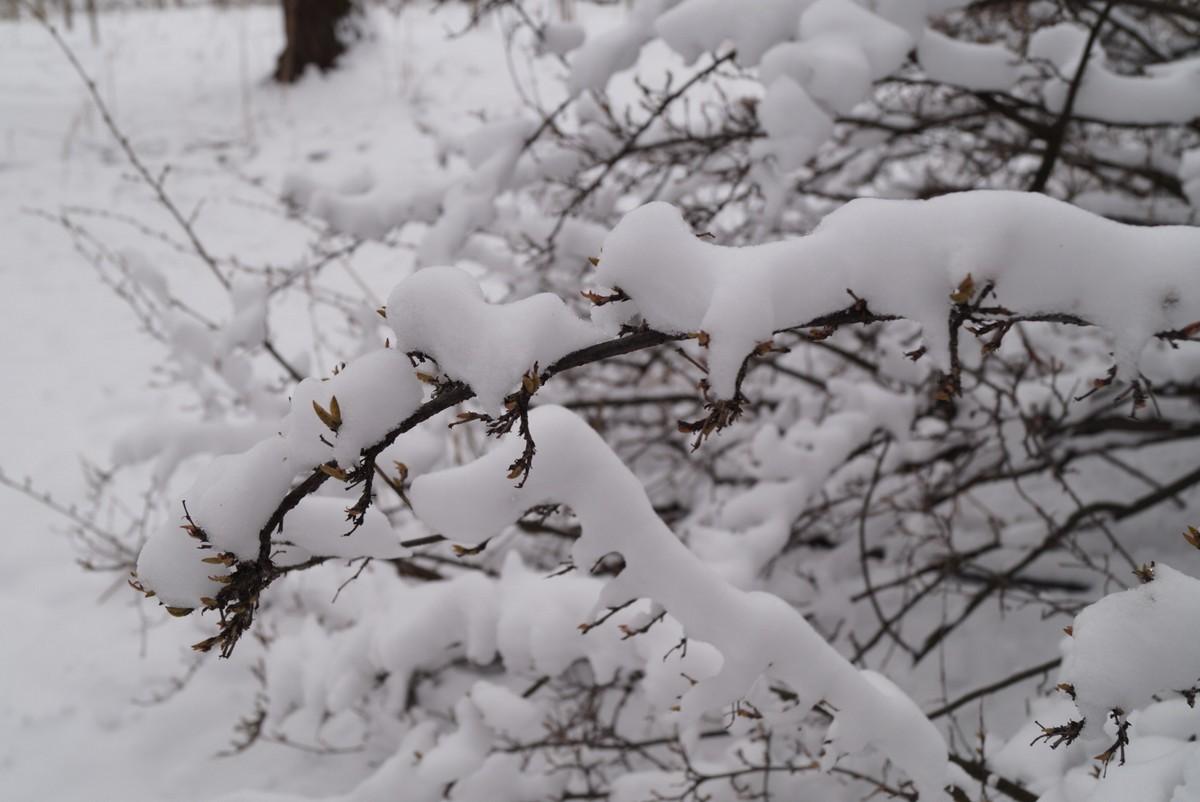Апрель в Удельном парке. Снег на кустах.