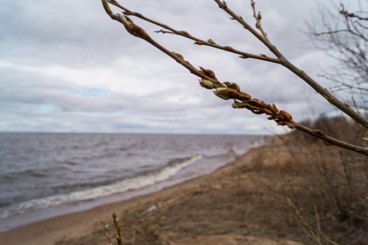 На берегу Чудского озера в Гдовском районе. Весна так и не пришла. Конец апреля.