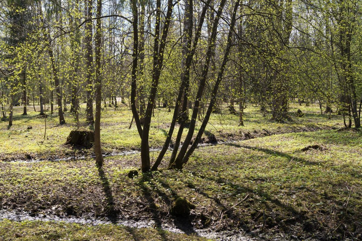 Пушкин. Александровский парк. Уже почти майское настроение.