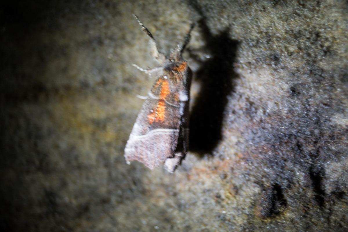 В Доложской пещере. Мотылек на стене пещеры.