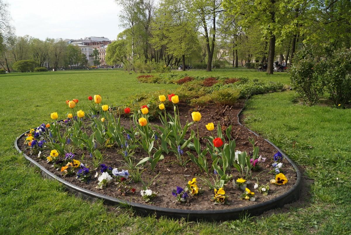 Юсуповский сад. Конец мая. Тюльпаны.