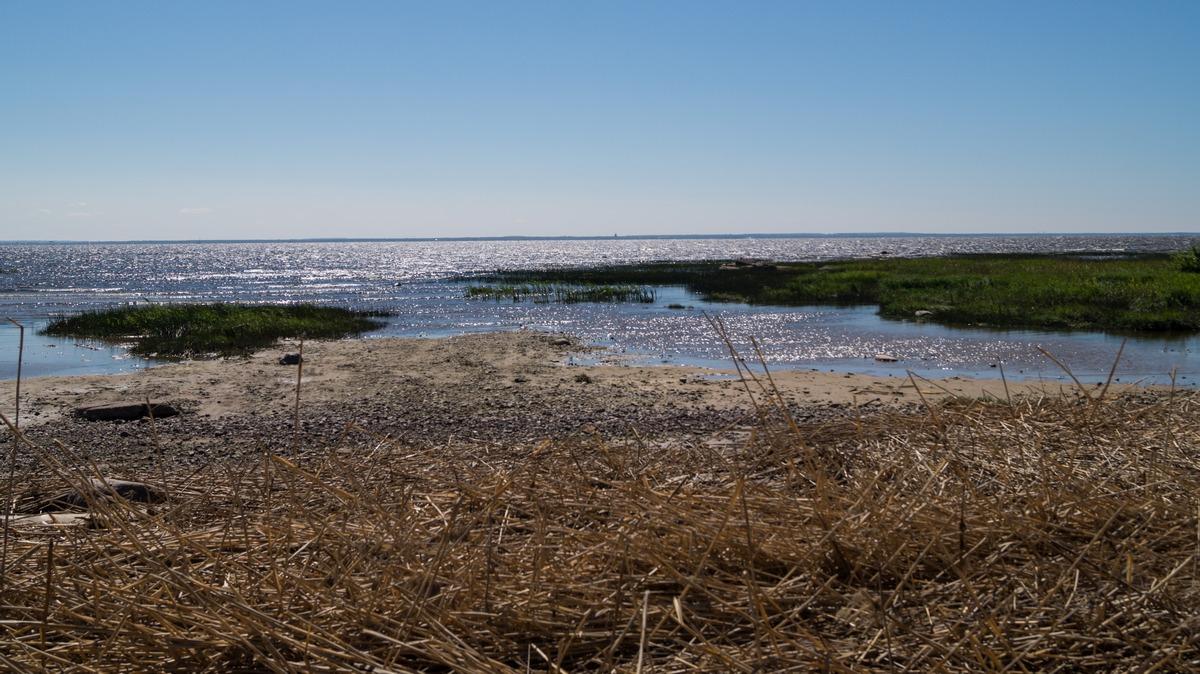 Ольгино. На берегу Финского залива. Начало июня.