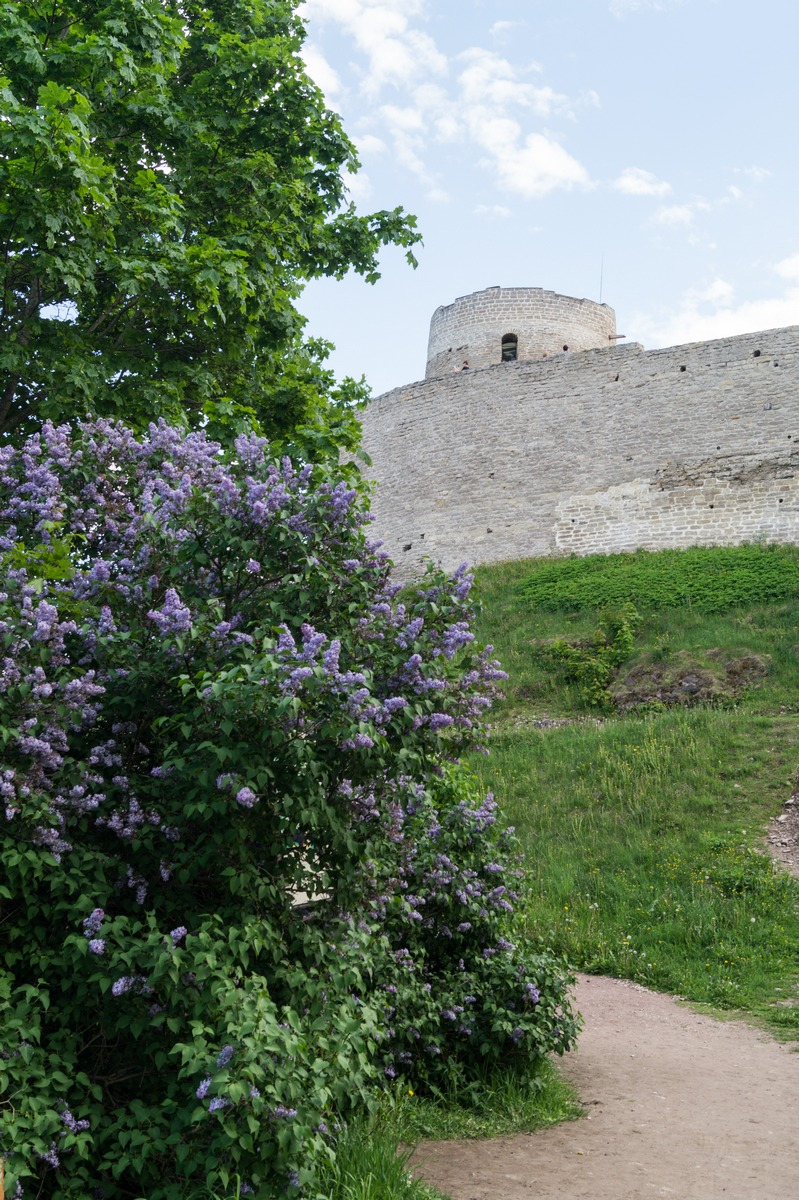 У Изборской крепости. Вид на башню Луковка.