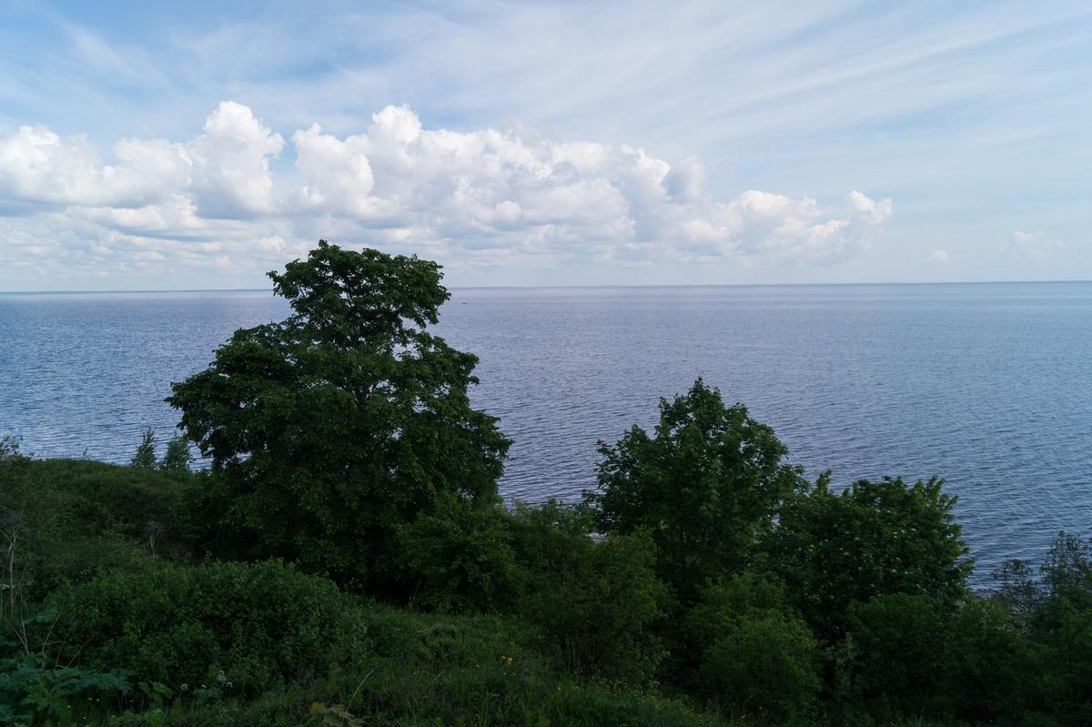 Коростынь. На высоком берегу Ильменя. Начало июня.