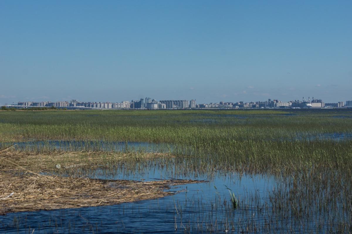 Ольгино. На берегу Финского залива. Вдалеке город.