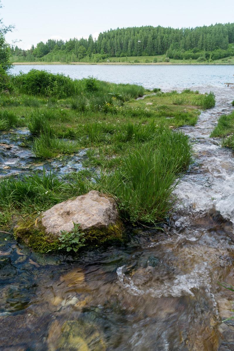 Изборск. У Словенских ключей. Ручей впадает в Городищенское озеро.