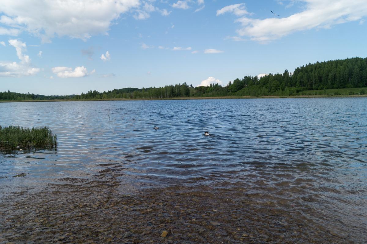 Изборск. У Городищенского озера.