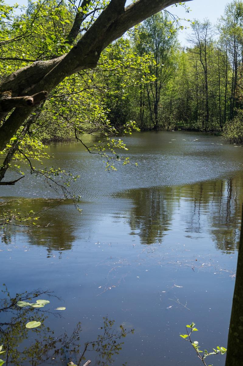 Конная Лахта. У Петровского пруда. Отсюда давным-давно был извлечен Гром-камень.