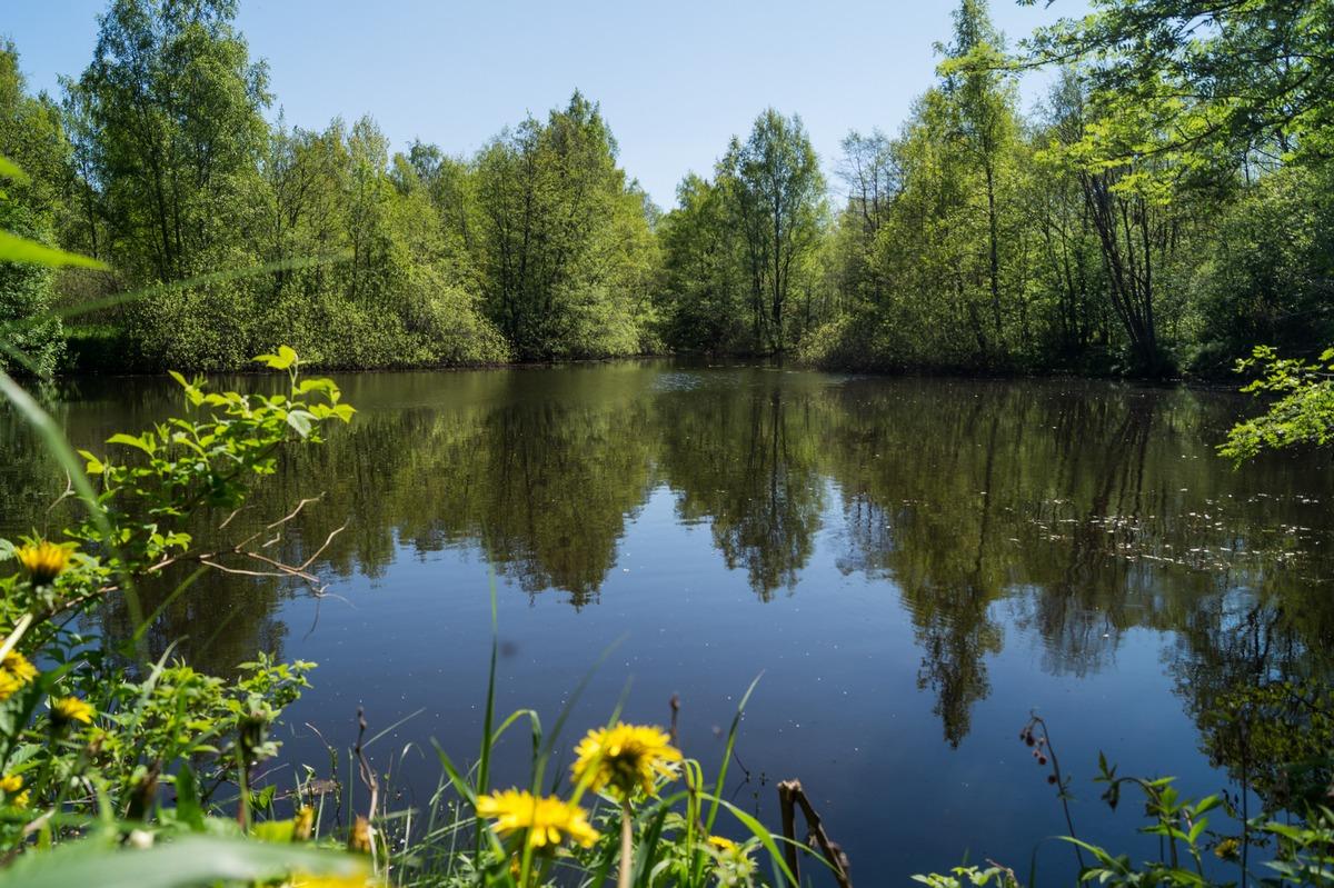 Петровский пруд в окрестностях Конной Лахты.