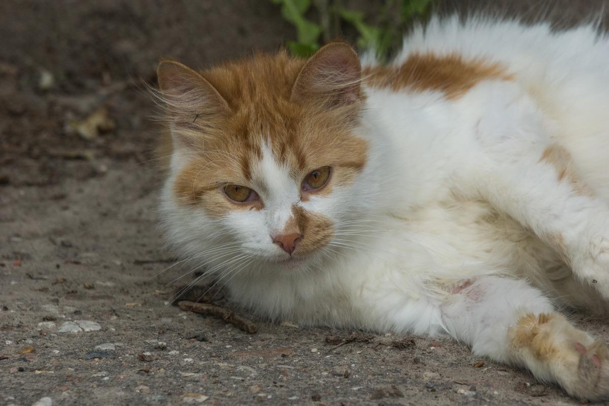 В Старой Руссе. Просто кот.