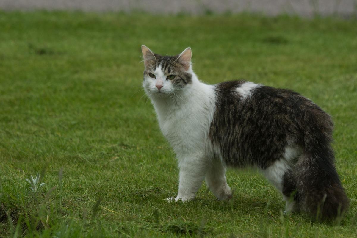 Варлаамо-Хутынский монастырь. Кот:  да я просто так вышел. Погода хорошая, правда?