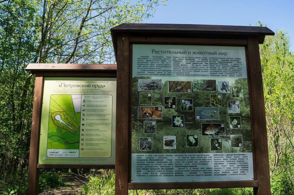 Конная Лахта. У Петровского пруда. О растительном и животном мире этого островка природы.