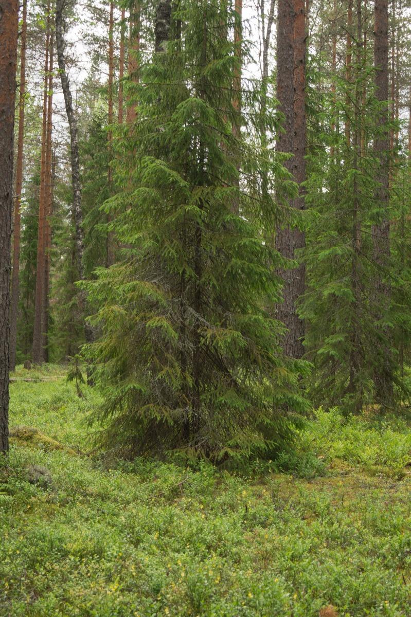 В Кирилловском. В лесу.